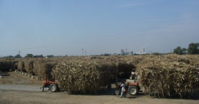Pakistan's powerful sugar cartel secured big state subsidies while growers lost out. Photo: Wikimedia Commons